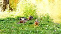 ducks surreal 1 - Enten surreal 1 by mateart