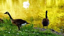 canada goose surreal 2 - Kanadagänse surreal 2 von mateart
