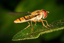 Schwebfliege von photoart-hartmann