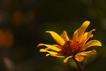 Gartenblume by Barbelotta  1