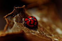 Red lady bug by Isabel  Laurent