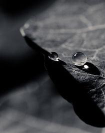 Drop Light by Isabel  Laurent