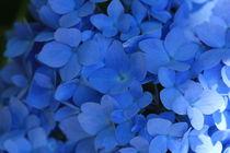 Blue flowers by Silke Bicker