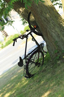 Rad im Baum von Silke Bicker