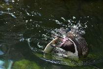 Pinguin von sarahs-schnappschuss
