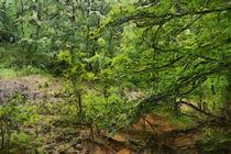 Wild Green  by dado