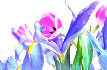 Tulips and Iris #3 von Christine Chase Cooper