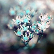 blaue Blüten by Jens Berger