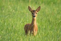 Neugierig von eifel-wildlife