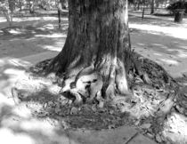 Roots by O.L.Sanders Photography
