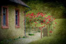 Rosen von Elke Balzen