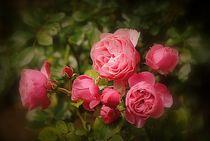 Rosen Blüten by Elke Balzen