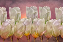 TULIP ABSTRACT von tomyork