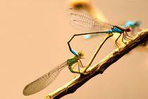 Wenn Libellen lieben bilden Ihre Körper ein Herz - If dragonflies make love there bodies built a heart von mateart