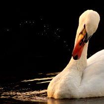 a swan creating a universe - ein schwan erschafft ein universum by mateart