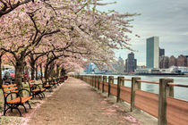 Spring in New York City by JC Findley