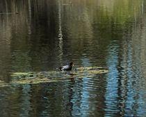 On the Water von Dan Richards