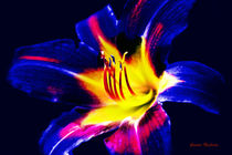 Eine bunte Lilie von Gunter Nezhoda