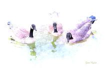 3 Enten im Teich by Gunter Nezhoda