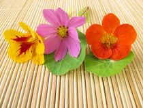 Strauß mit essbaren Blüten by Heike Rau