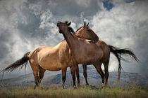 Montana Horses near Glacier National Park by Randall Nyhof