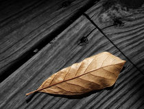 Fallen Magnolia Leaf on a Gray Wooden Deck von Randall Nyhof