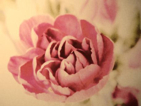 Vintage-pink-2