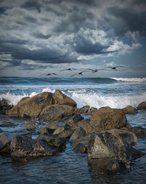 Pelicans over the surf on Coronado von Randall Nyhof