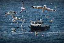 Gull Chased Fishing Boat von Randall Nyhof
