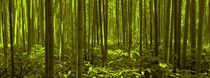 Bamboo Forest Twilight  by David Dehner