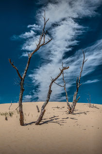 Cirrus Clouds with Dead Trees at Silver Lake Dunes by Randall Nyhof