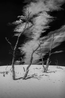 Dead Trees and Cirrus Clouds on the Dunes by Randall Nyhof