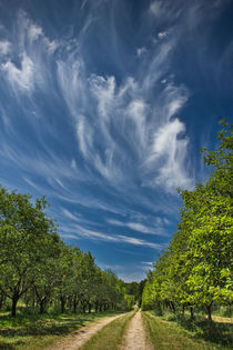 West Michigan Orchard Road with Cirrus Clouds by Randall Nyhof