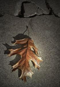 Fallen Oak Leaf von Randall Nyhof