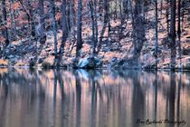 Reflections by Dan Richards