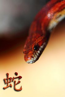 2013 - Year of the snake von Christoph Caina