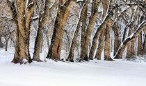 Der Schneesturm by JC Findley