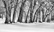 Der Schneesturm Schwarz und Weiß von JC Findley