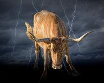 Bull Market von Randall Nyhof