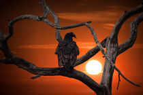 Vulture at Sunset von Randall Nyhof