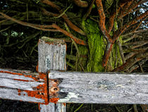 Cattle Fence on the Mendocino Coast by Kathleen Bishop