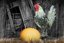 'Which came First the Chicken or the Egg?' von Randall Nyhof