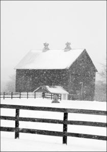 Barn in a snowstorm. von Randall Nyhof