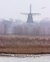 DeZwaan Windmill in Holland, Michigan by Randall Nyhof