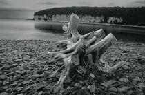 Tree Stump at Fayette Michigan State Park von Randall Nyhof