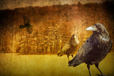 Ldsp-hall-lake-w-raven-0228-4