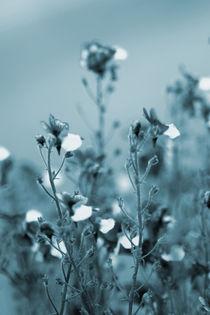 Blüten von Jens Berger