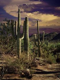 Ldsp-saguaro-cactus-0006-2