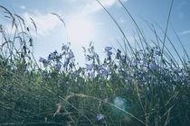 Sommerwiese von dresdner