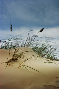 Dune and Beach Grass on Padre Island by Randall Nyhof